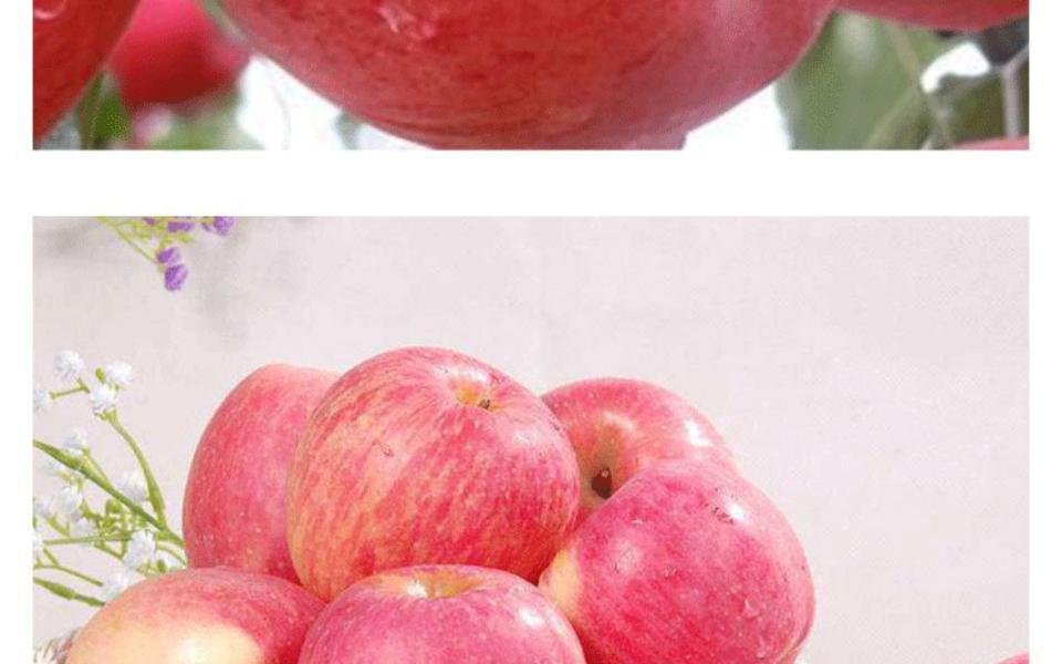 富士苹果1_06.gif
