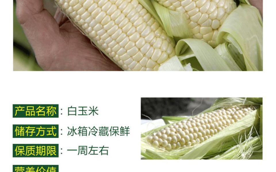 白玉米_02.gif