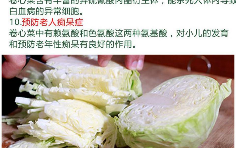 卷心菜_06.jpg