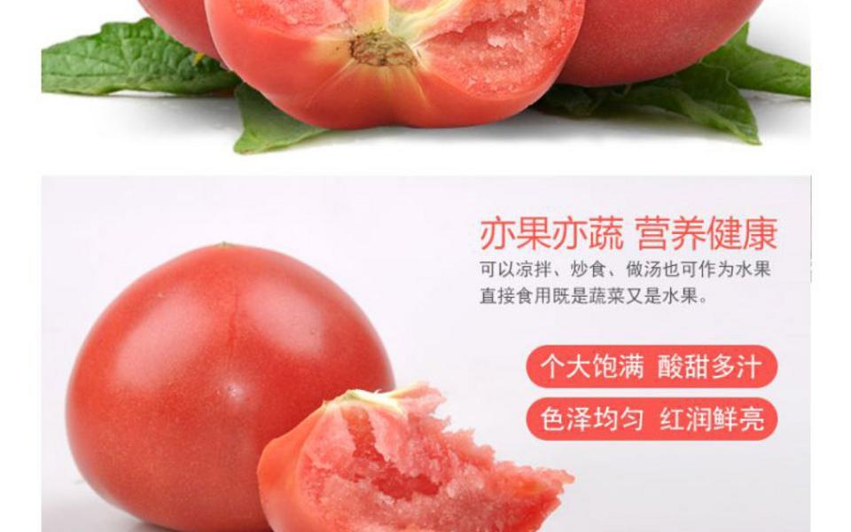 西红柿_02.jpg