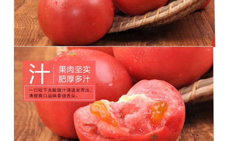 西红柿_05.jpg