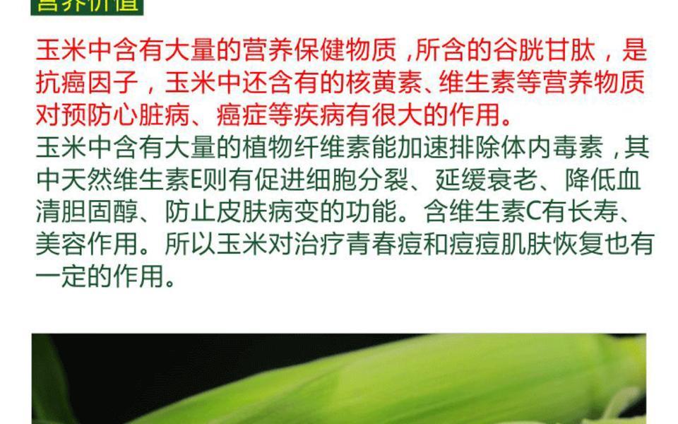 白玉米_03.gif