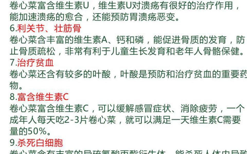 卷心菜_05.jpg