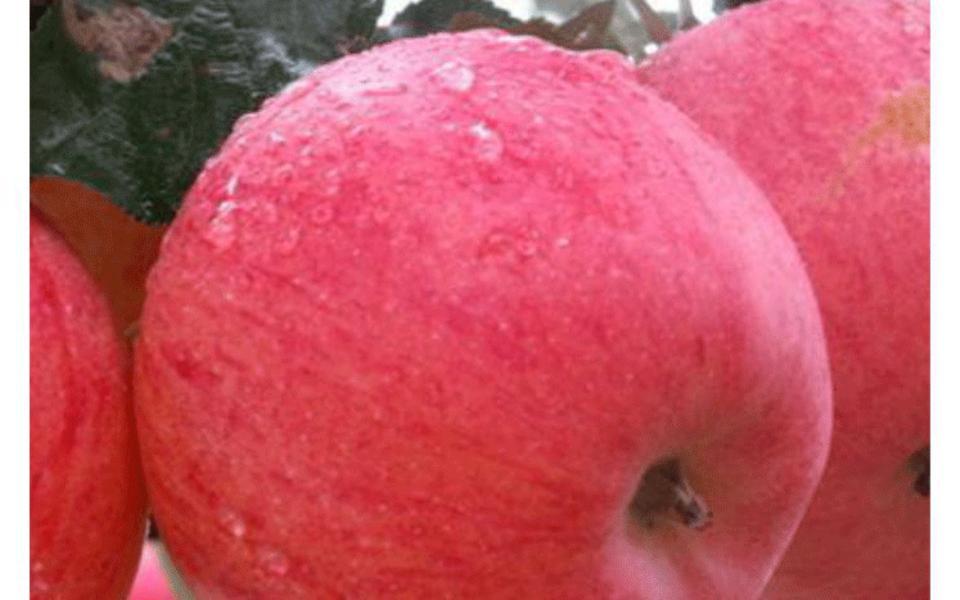 富士苹果1_05.gif