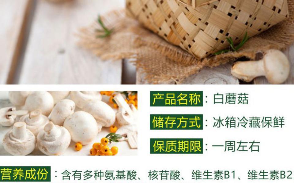 白蘑菇_03.jpg