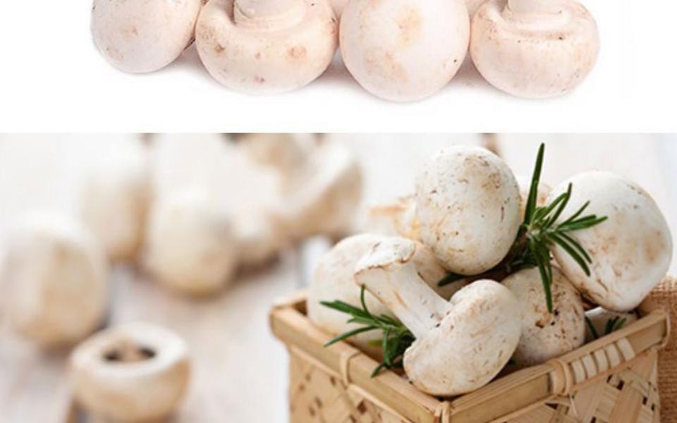 白蘑菇_02.jpg